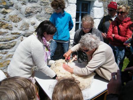 Jeanne et Delphine pratiquent la tonte aux ciseaux comme autrefois