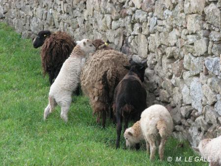 agneaux4