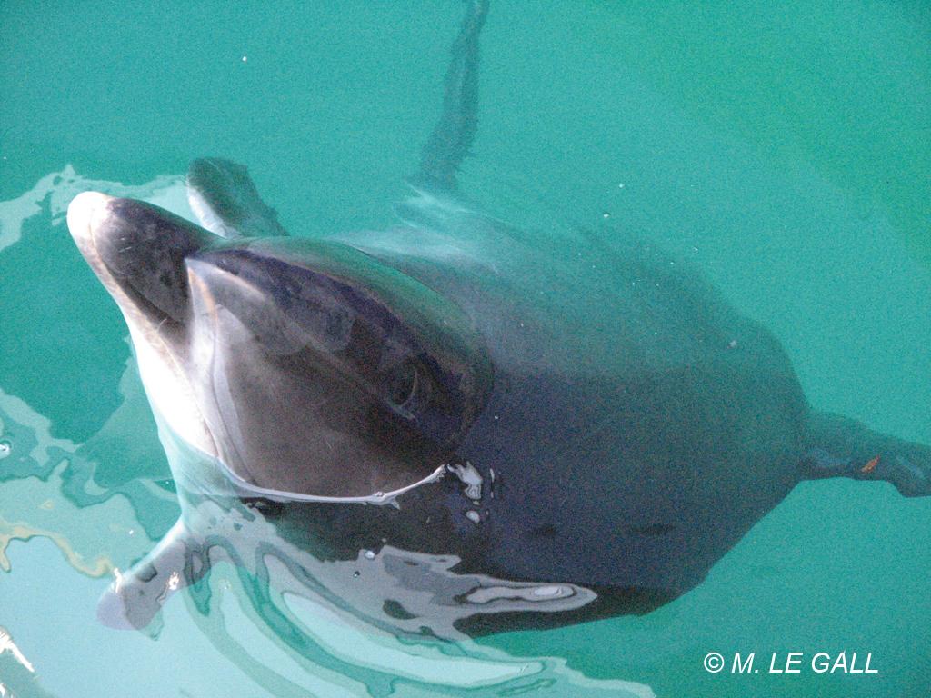 Les dauphins visitent Ouessant - Ouessant - Office de Tourisme ... 34bfdeddf678
